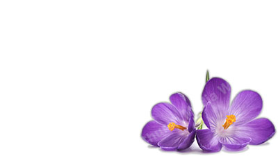 Purple Flower White Background Christian Worship Background In Hd