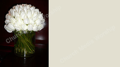 White Roses Cream Christian Worship Background. High quality worship images for use to spread the Gospel and enhance the worship experience.