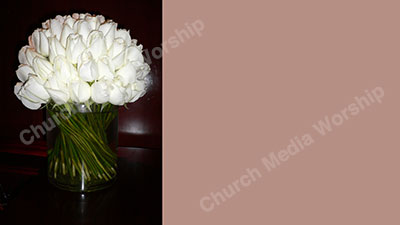 White Roses Pink Christian Worship Background. High quality worship images for use to spread the Gospel and enhance the worship experience.